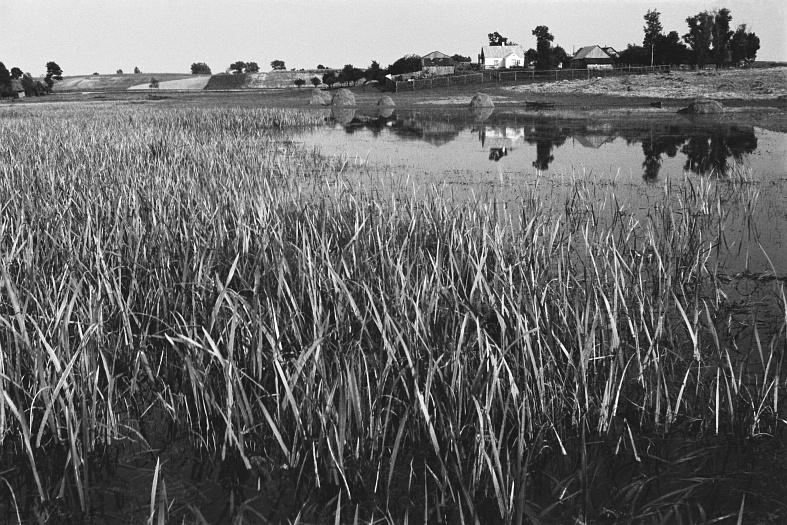 Pavasarinis potvynis Žuvinte užliejo nušienautas pievas. 1957 m.